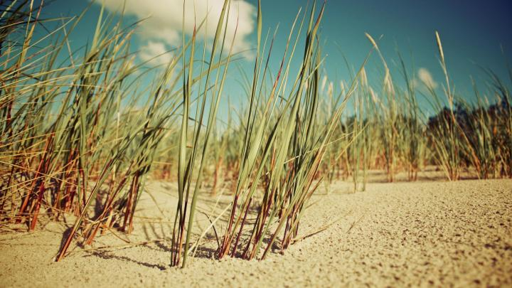 Sand (2560×1440)