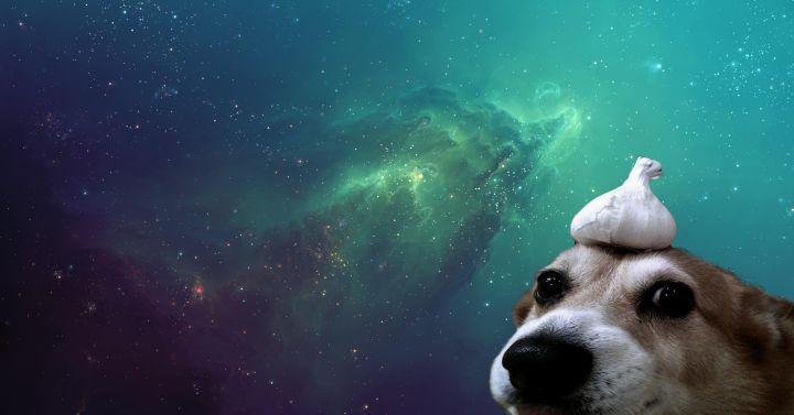 Doggo (1920×1080)