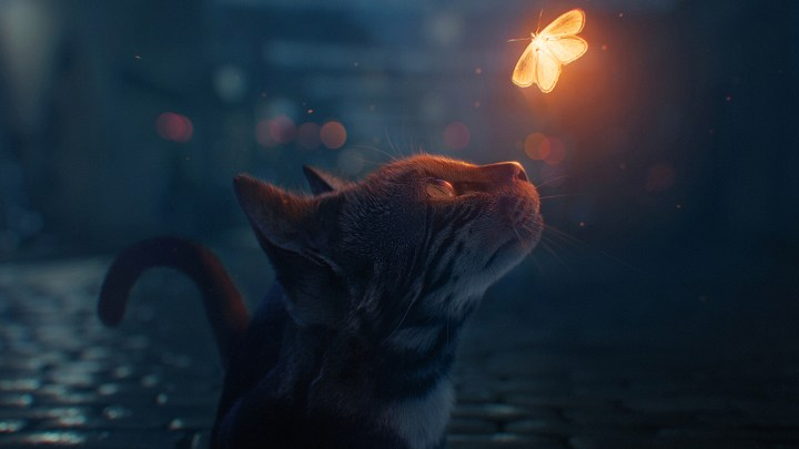The cat and the firefly. [3840×2160]