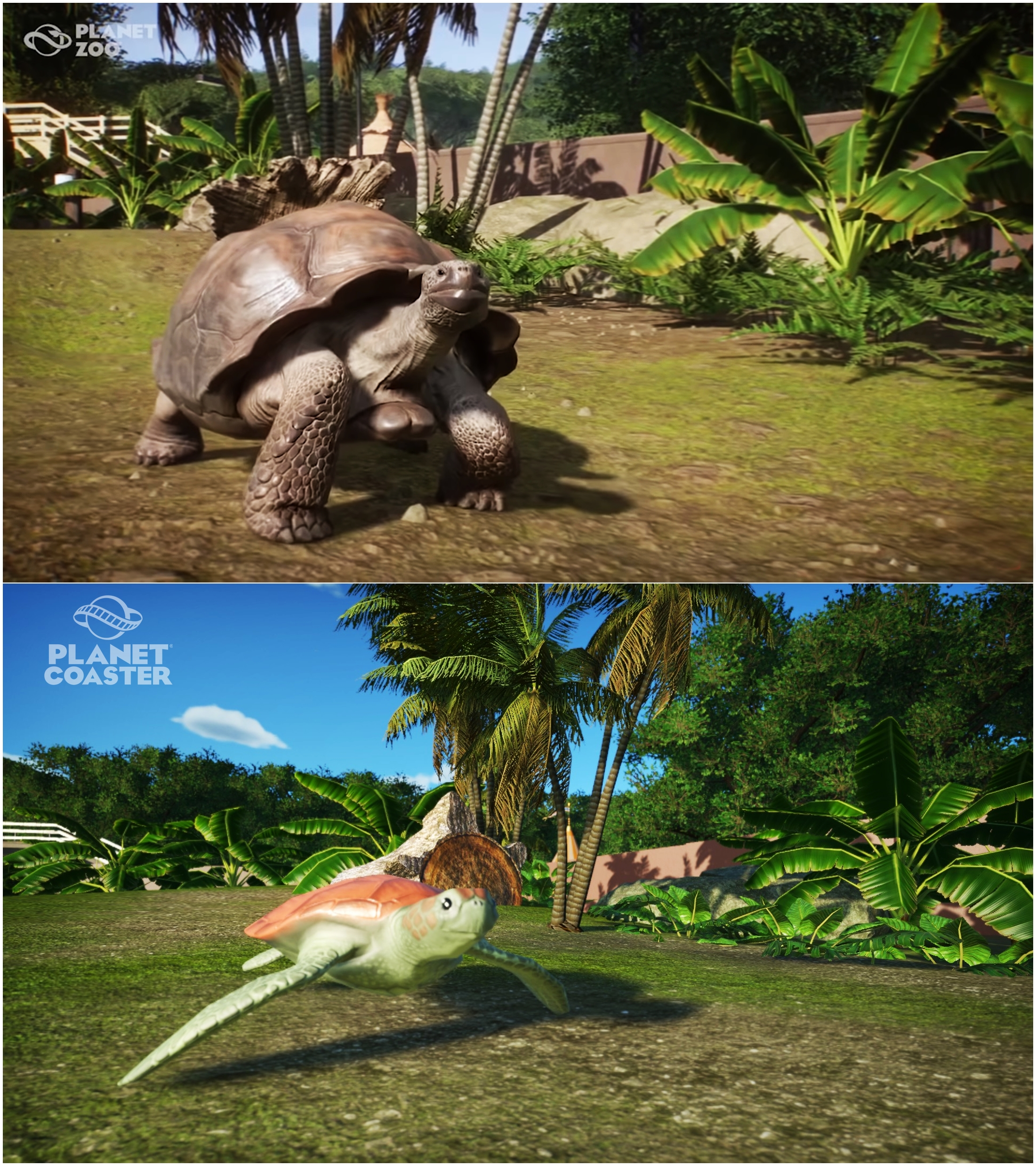 Planet Zoo Vs Planet Coaster Recreate From Giant Galapagos Tortoise Clip Planetcoaster