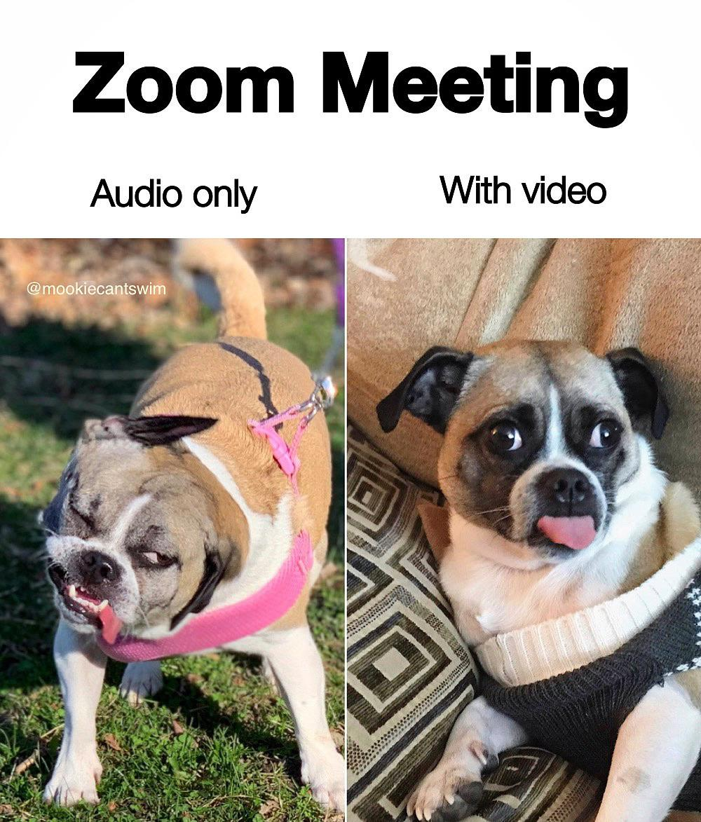 Zoom Memes To Laugh At While Your Mic Is Muted 30 Memes