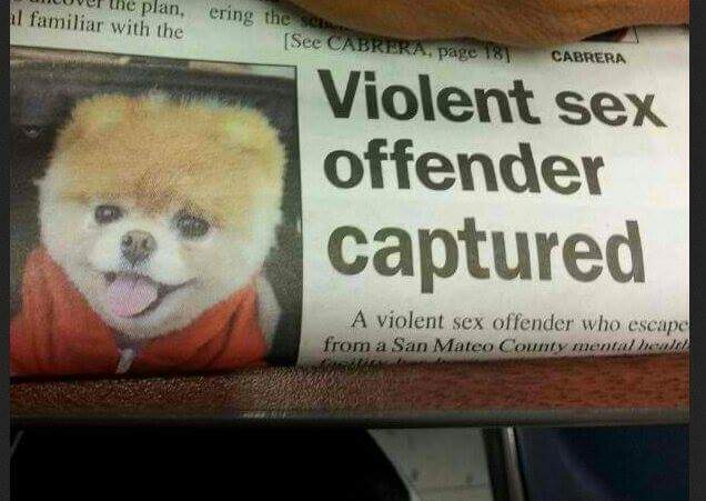 Hay razas de perro peligrosas y luego está este