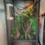 Veiled Enclosure Going Strong Chameleons