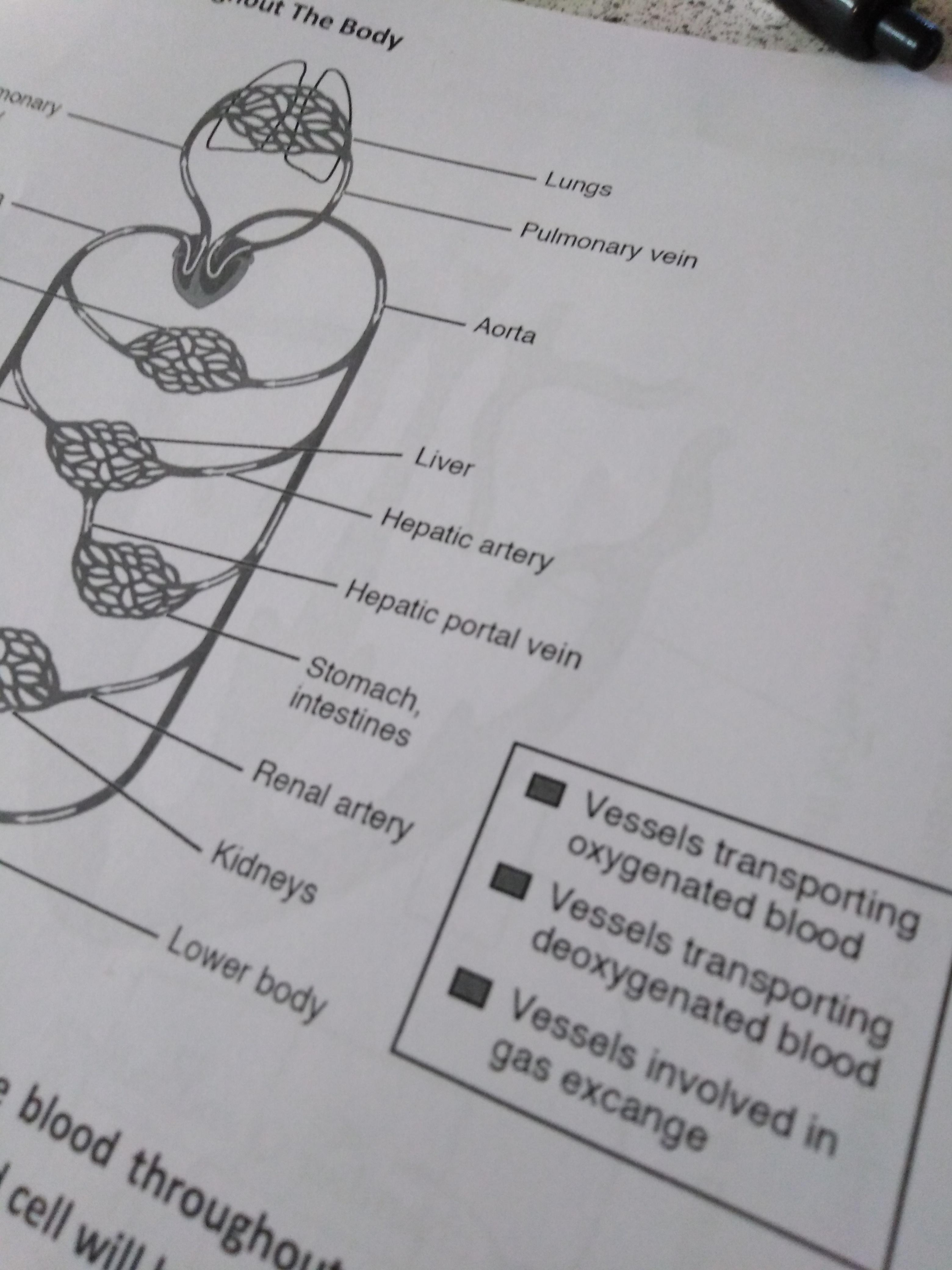 Biology Worksheet Printed In Black And White Crappydesign