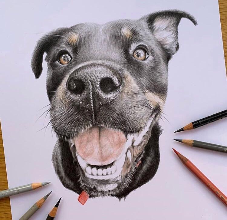 Pencil Drawing Of A Dog Interestingasfuck
