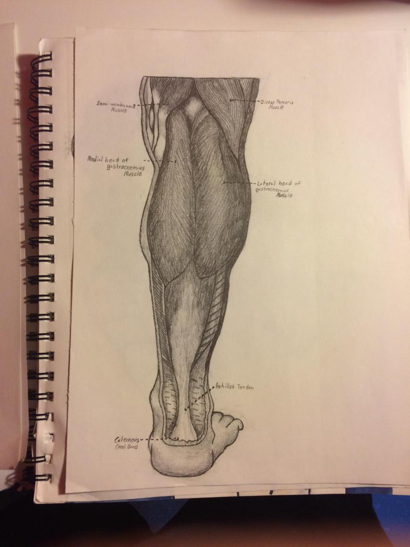 Freehanded drawing from anatomy book part 2 : drawings