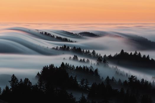 rolling fog at Mount Tam
