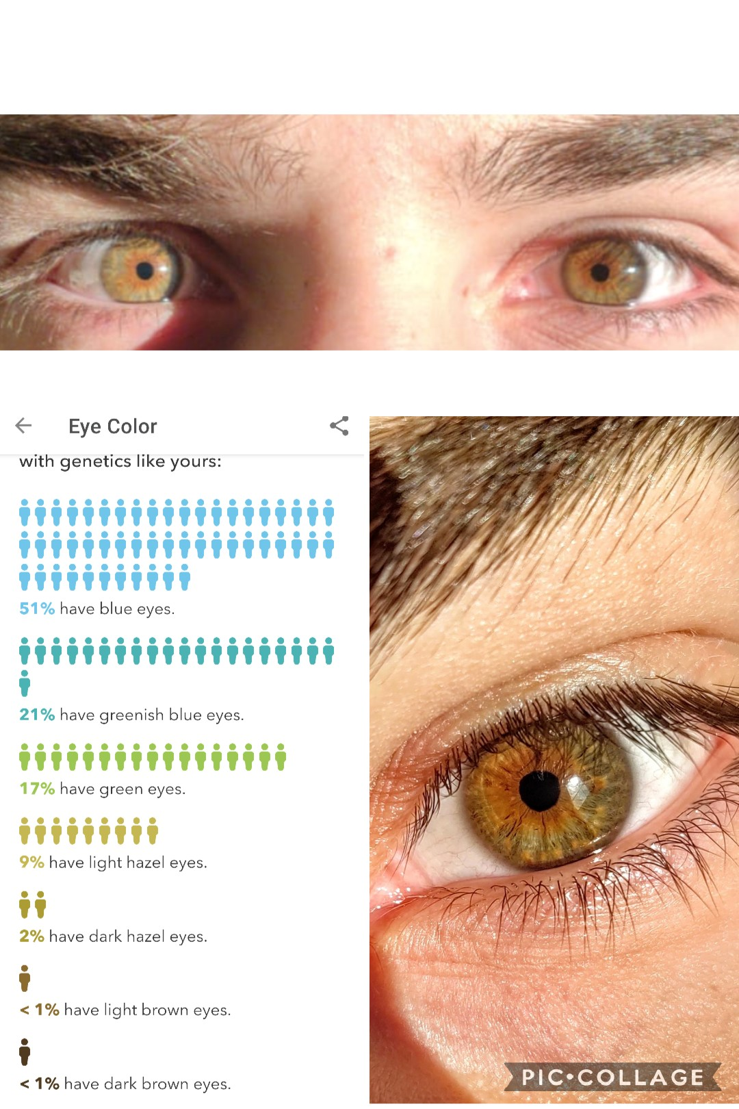 Hazel Eye Color Genotype