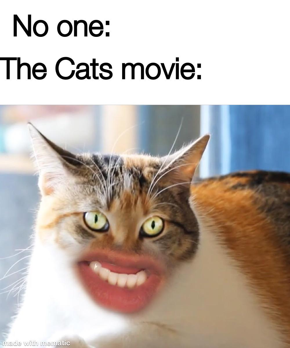 Cats Memes And Reactions That Will Make You Want To Gauge Your