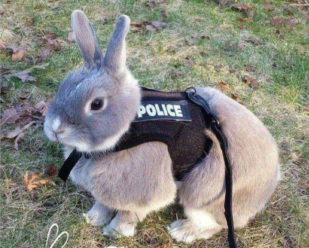 Image result for rabbit