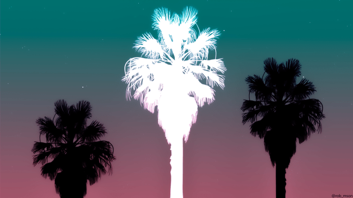 Palm trees [3840×2160] by me