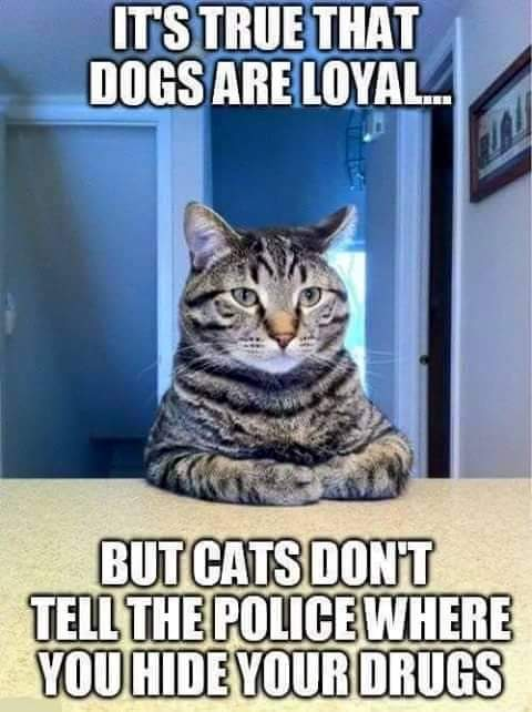 Dogs Vs Cats - Which is loyal?