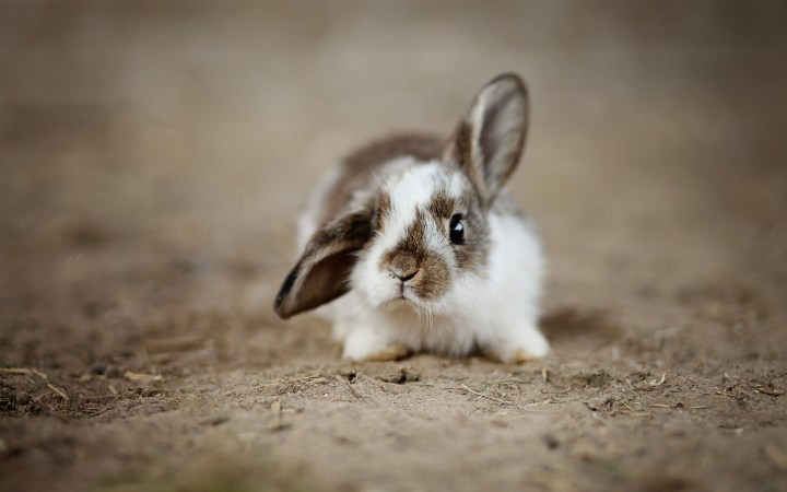 [1920 x 1200] Rabbits