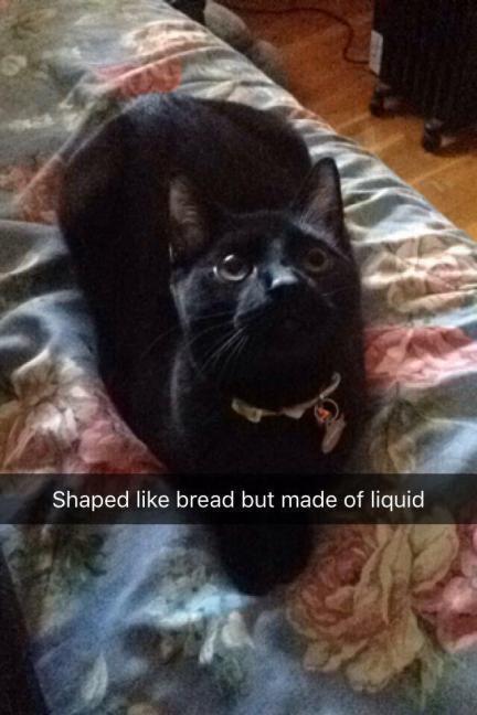 Image result for black cat liquid