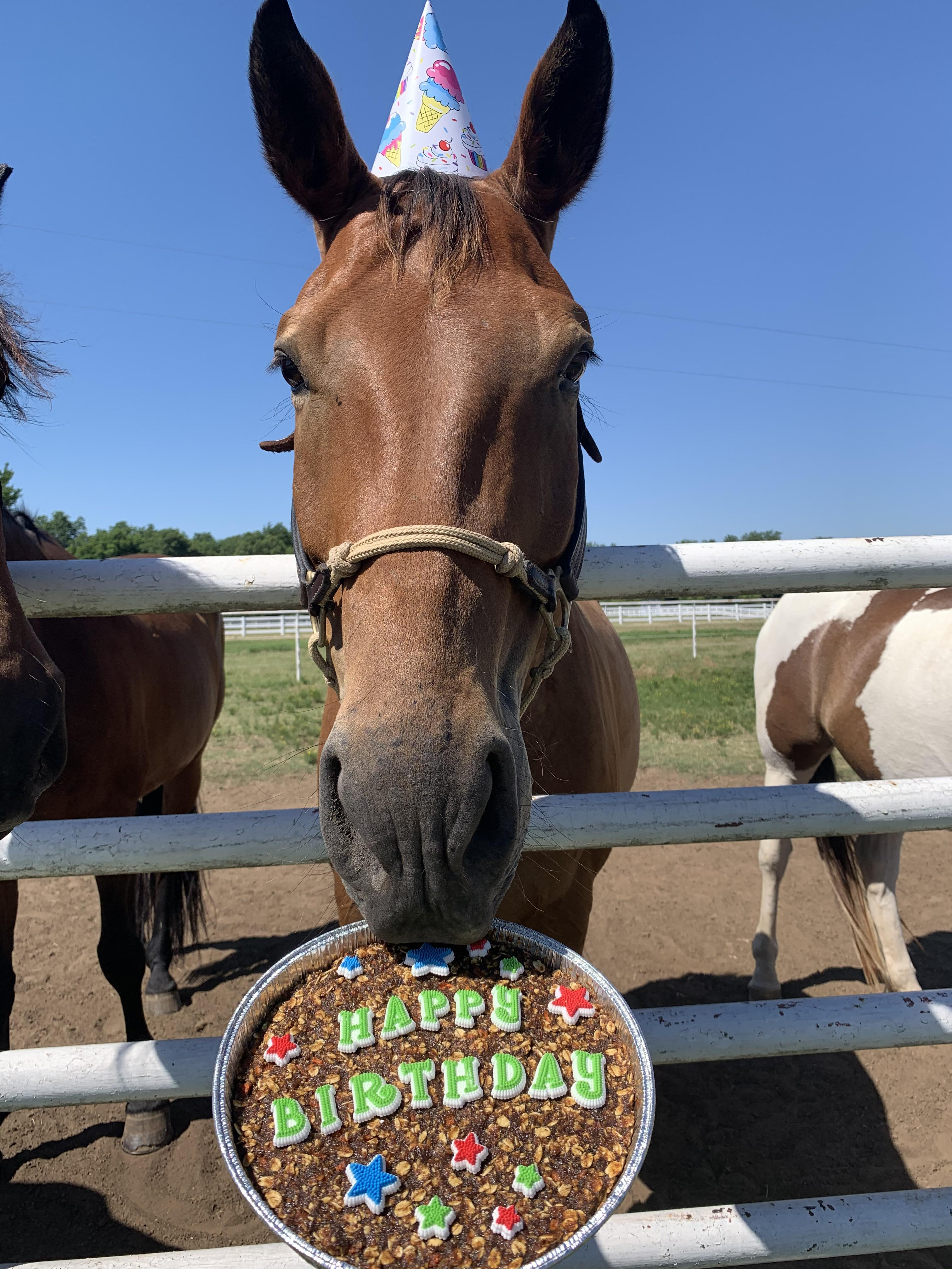 Happy Birthday Milo He S Been My Partner In Crime For Almost 5 Years And I Love Celebrating Him Every Chance I Get Horses
