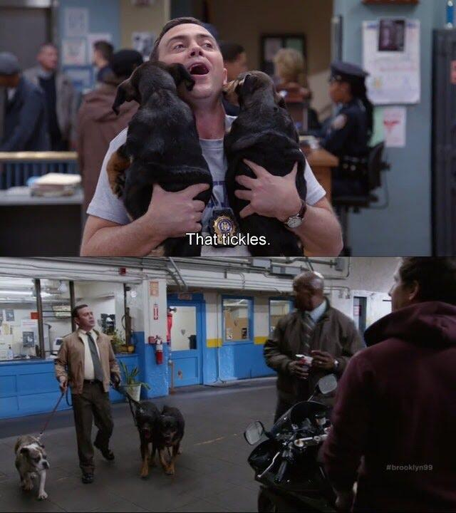 Brooklyn Nine-Nine Boyle Dogs Details