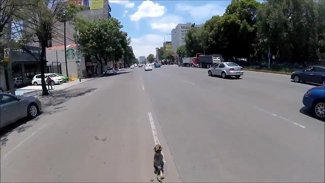 Intense High Speed Dog Rescue Through Streets Of Mexico City