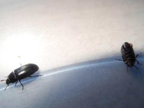 petits insectes dans la salle de bain