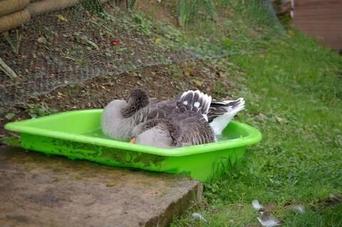 bac pour oie et canard