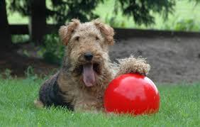 Indestructible Dog Toy!