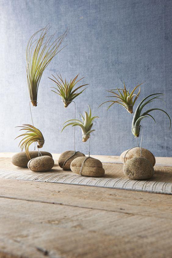 Easy Hanging Plants