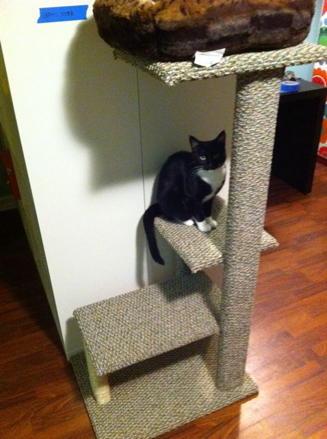 9 Simple DIY Cat Trees To Spoil Your Kitty Shelterness