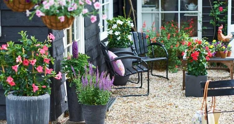des plantes en pot dans le patio ou sur