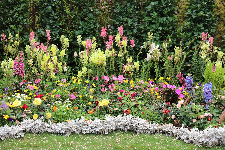 Combiner Plantes Vivaces Et Bulbes De Fleurs Bakker Com