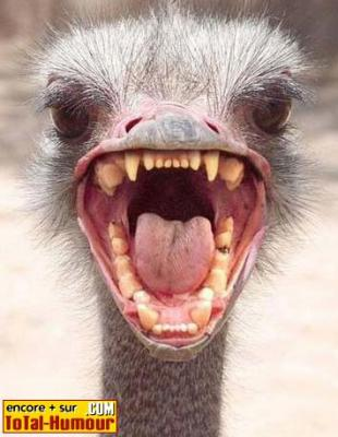 Funny Teeth With Images Funny Smile Bones Funny Funny Animals