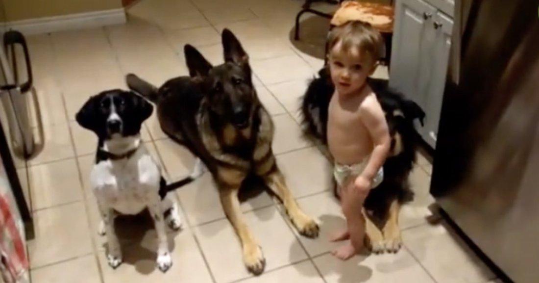 d4 10.png?resize=1200,630 - Un petit bébé sert de la nourriture à ses trois chiens obéissants dans une vidéo adorable
