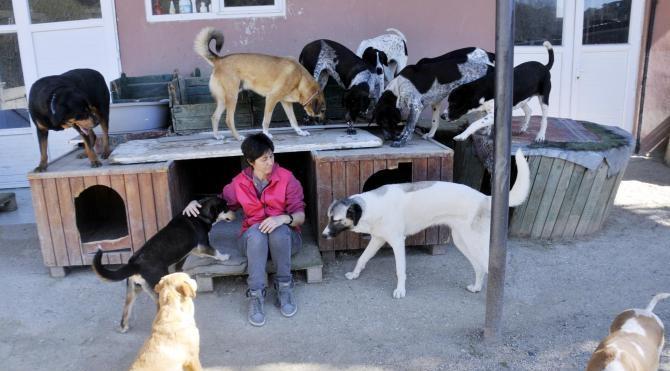 Sahipsiz hayvanlar için Antalya'da satın aldığı arsaya barınak yaptı