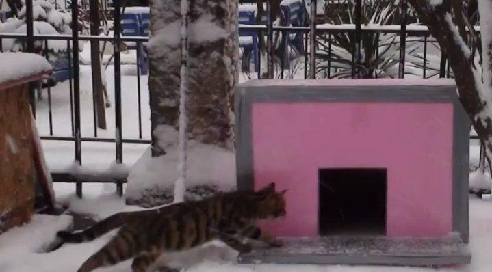 (fotoğraf temsili) Engeler'in amacı kedilerin barınması için apartmanının bahçesine kedi evi yapmaktı...