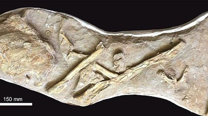 İngiltere'de 66 milyon yıllık balık fosili