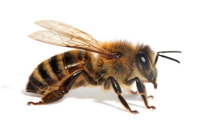 Böcek sokması ne zaman tehlikelidir? 17