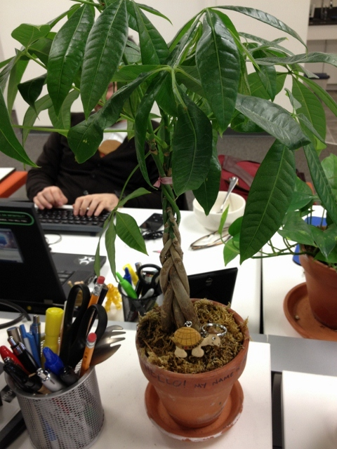 Houseplants Is It Time To Repot My Desk Plant Gardening Amp Landscaping Stack Exchange