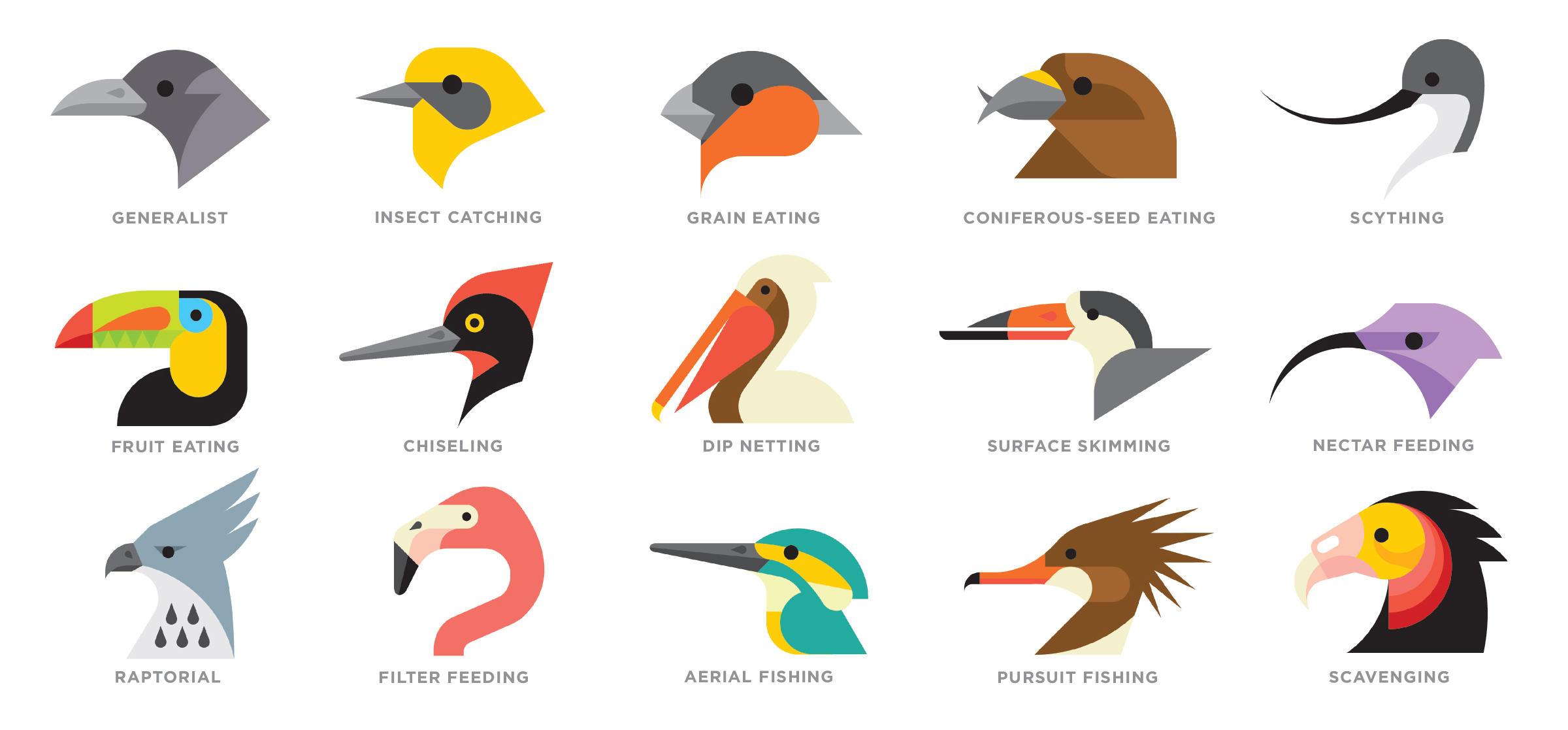 Different Types Of Birds Beaks Worksheet