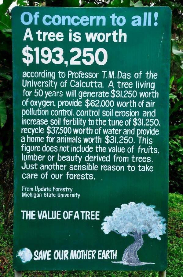 value of a tree image, monetary value of trees