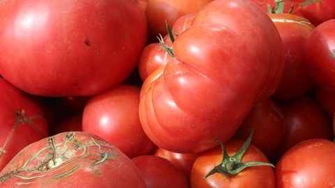 Growing Tomato Heaven: Garden grown tomatoes made easy!