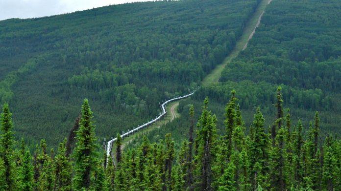 https://i2.wp.com/i.unu.edu/media/ourworld.unu.edu-en/article/3859/forest-with-road.jpg?w=696&ssl=1