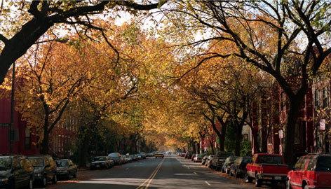 Elm-lined street in Washington, DV