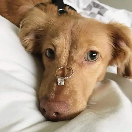 if you have a pet, why not make a pic together showing off your engagement ring, your pet will anyway take part in the wedding