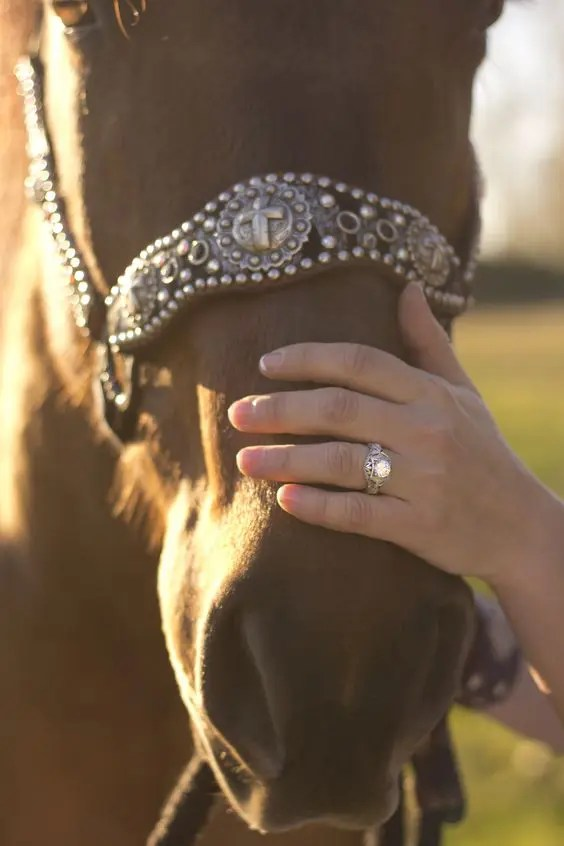 if you love riding horses or have them at your farm, why not go take a pic with them and your ring