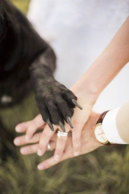 incorporate your pet into your wedding pics, let him or her put a paw on your hands with rings for fun