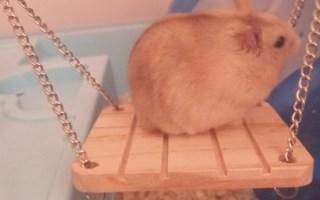 沙雕小鼠日常