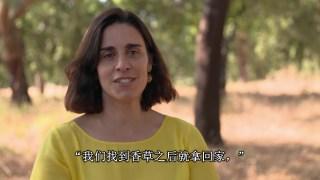 葡萄牙美食阿连特茹火腿及栓皮栎软木种植者的生活