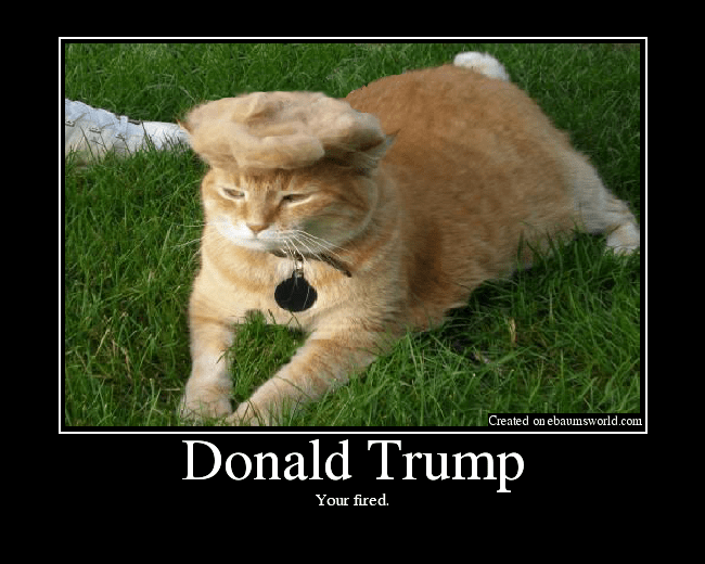 Original Donald Trump Cat Toupee
