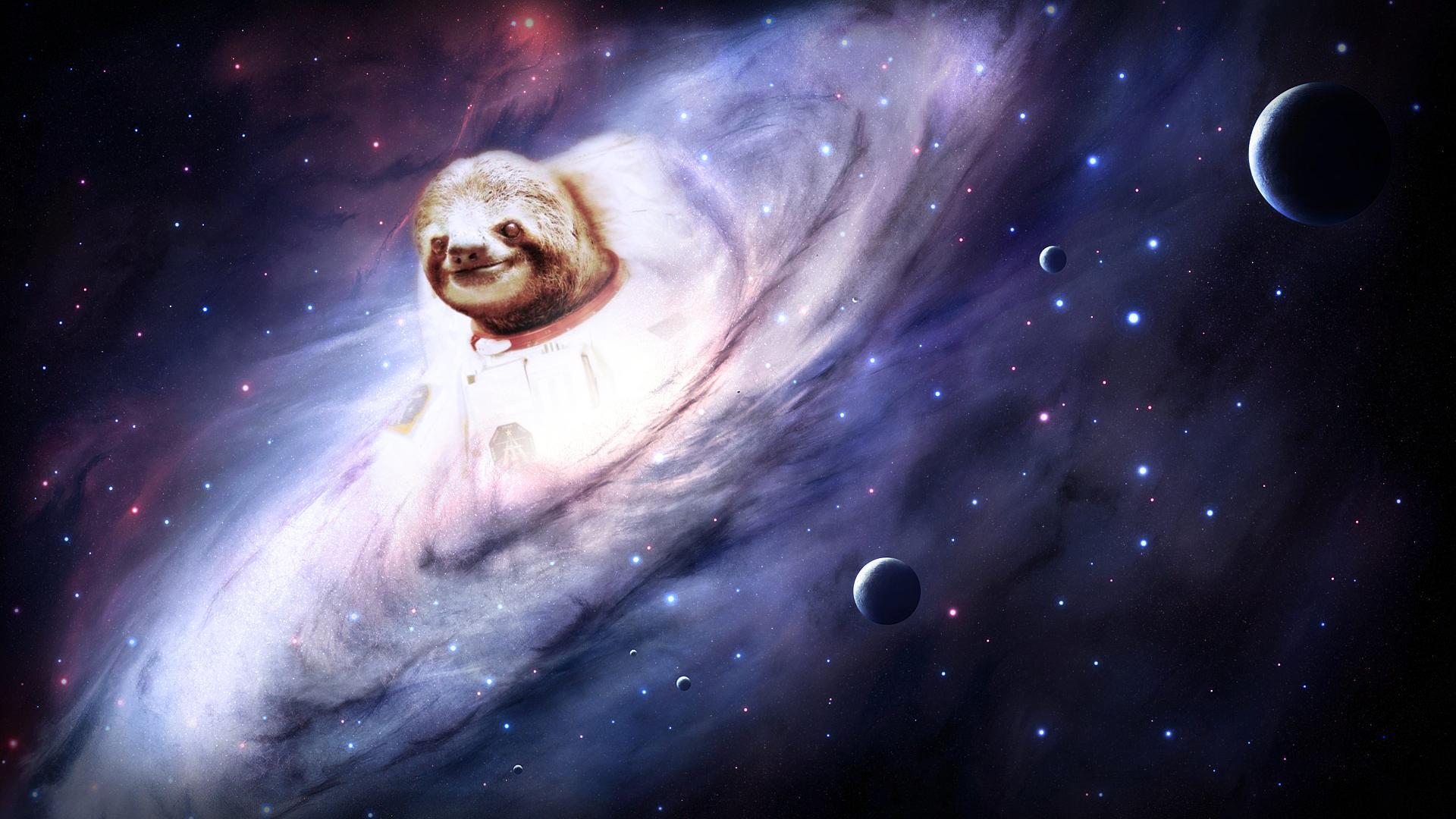 Wallpaper 4 Sloths Know Your Meme