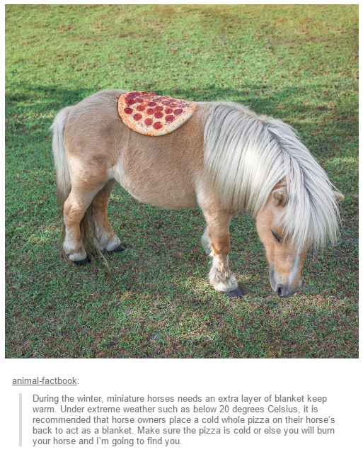 Warm Pizza For The Small Horse Pizza Know Your Meme