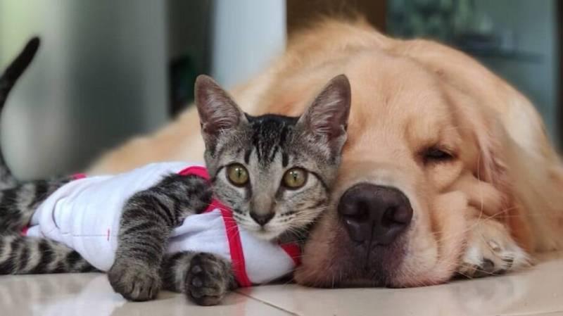 Cães e gatos podem viver juntos de forma saudável