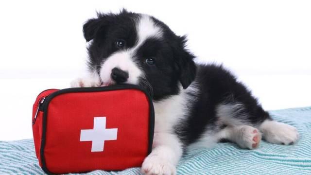 Como agir quando o seu pet precisa de ajuda
